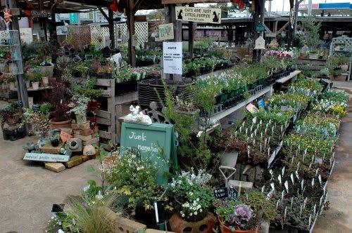 園芸植物、花苗、ガーデニング資材の販売店   富山 …