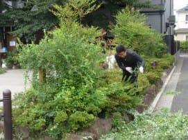 低木に絡む蔓の除去2.JPG