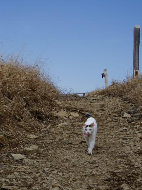 ミケ 山登り 猫 余命1か月で登山するネコ、ミケの飼い主・岡田裕の年齢、現在は?