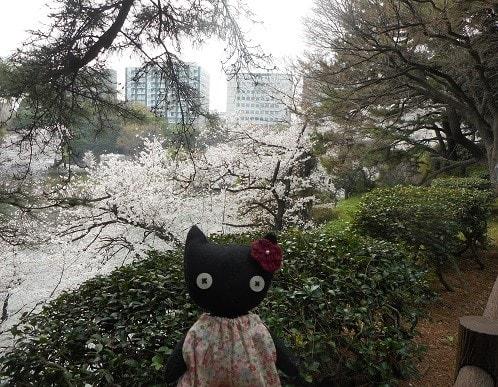 皇居・乾通りを散策した後、千鳥ヶ淵 から満開の桜を眺めました。