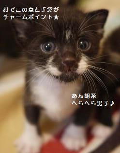 生まれたてで河原に捨てられていた7兄弟のうちの4匹です。 2012年6月12か13日生まれ。 猫風邪によるめやにほぼ完治。いまのところ健康状態良好。