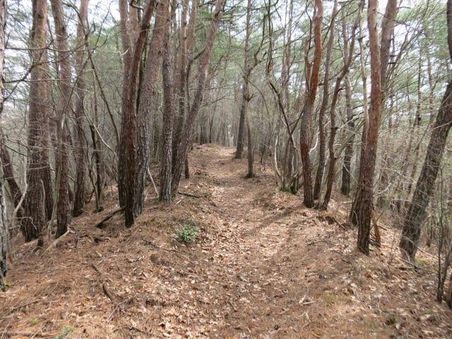 福島県矢祭町の桧山に登る 16年4月 - タケホープの酔いどれ走遊記
