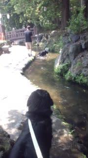 暑さでヘロヘロ→お水遊び