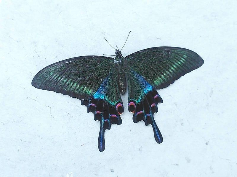 綺麗な蝶!