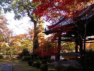 京都、十輪寺に来ています。