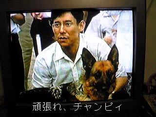 盲導犬チャンピィ - 箔と波のつ...