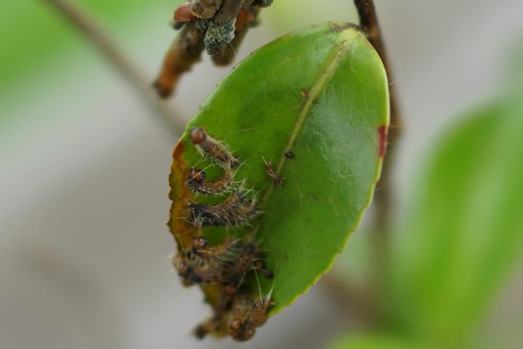 洗剤 ゴキブリ 中 性