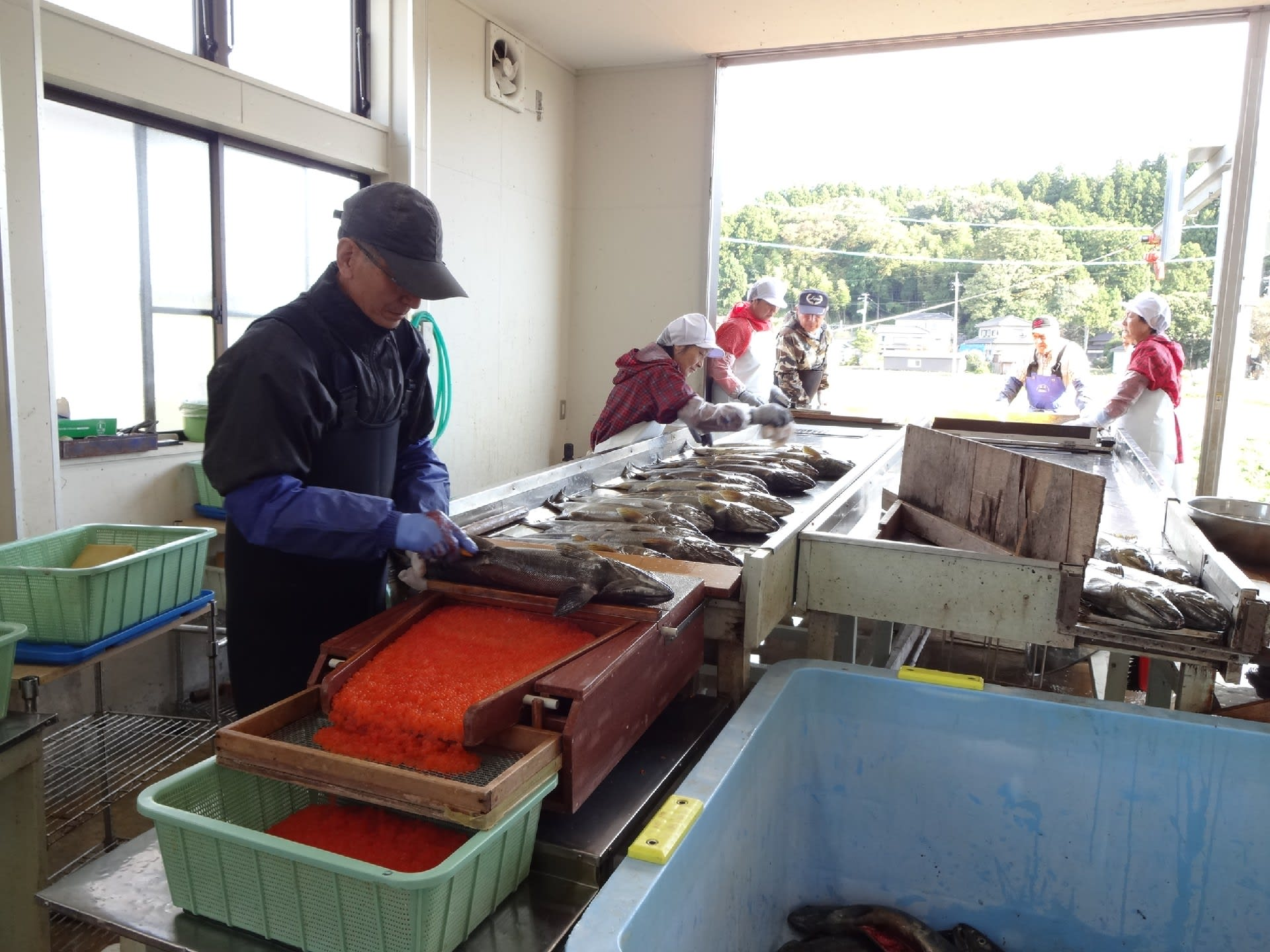 サケ不漁への挑戦