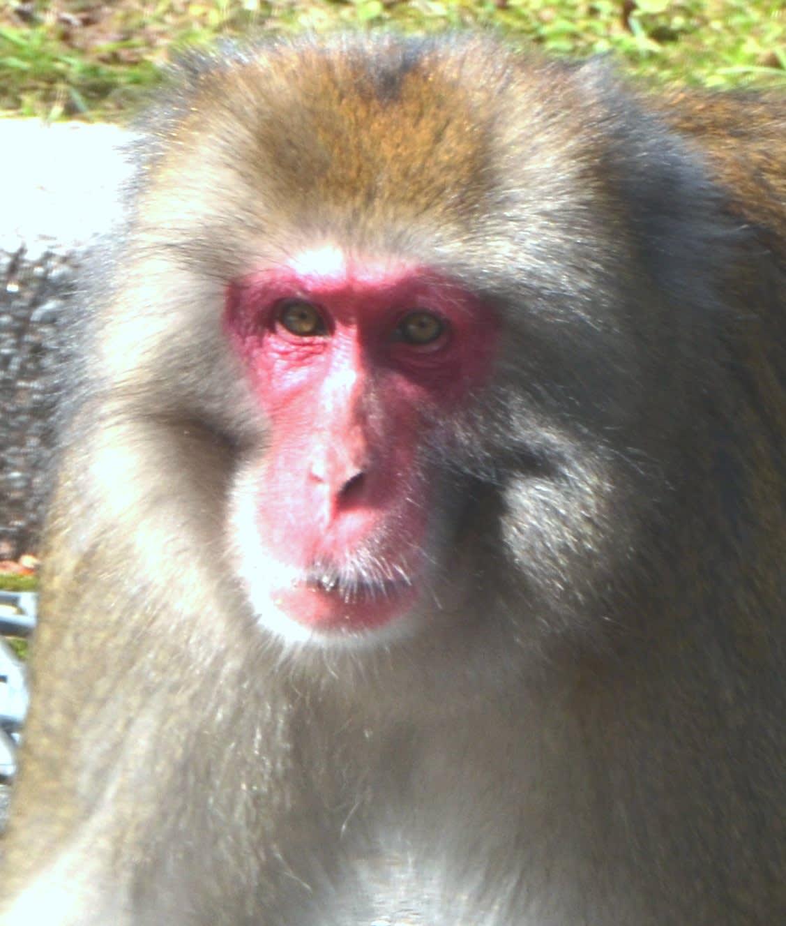 猿と雉が出てきますが、桃太郎の話しではありません。お時間のある方、クリックしてください。
