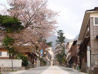 参道の桜。満開。香取方面は3分咲き~見頃…とバラバラ。桝水は終り掛け