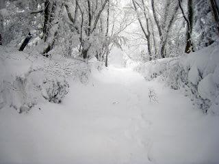 阿弥陀堂下。この辺りはまだまだ余裕?でも、吹雪くとこの付近でも遭難しそうな気分に