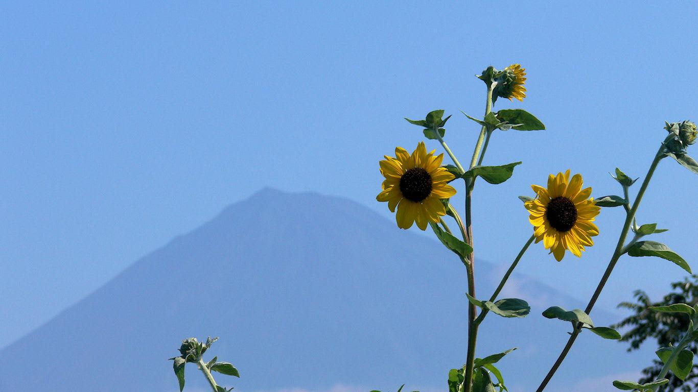 富士山と黄色い花 パソコンときめき応援団 壁紙写真館
