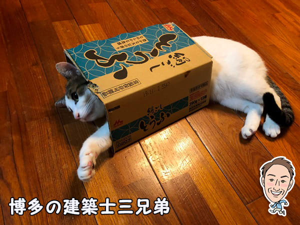 博多の建築士三兄弟_みーちゃんととうふの箱