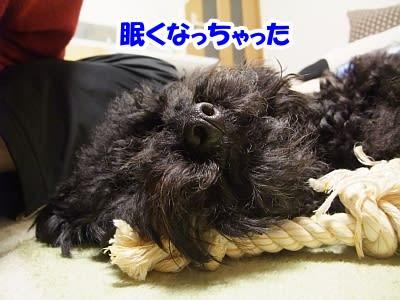 https://blogimg.goo.ne.jp/user_image/17/73/afae59ab49101437d392e17b0416094c.jpg