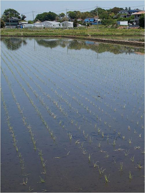 松戸→大津川(柏市)→手賀沼をポタリング - MAICOの 「 あ ら か る と 」
