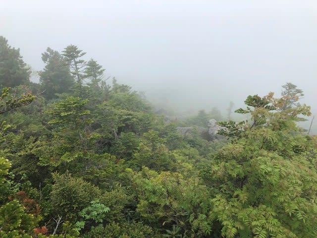 大弛峠 夢の庭園