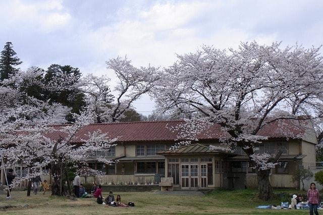 分校の桜 (小川町・下里分校) - 日々田舎暮らし
