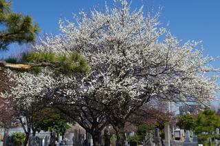 結局は自分がそのことをどう感じているるかということ - おおした鍼灸院のブログです|東京南青山