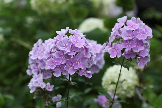 梅雨の庭を彩る花たち