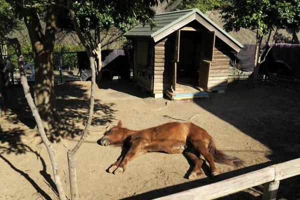 根岸競馬記念公苑と「馬の博物館」(横浜市中区) - かながわ いーとこ