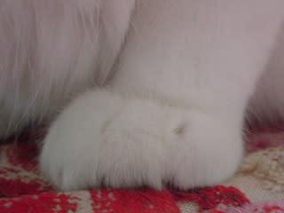 左足の拡大アップなのニャ!これだけ見ると、ヌイグルミみたいやニャ~