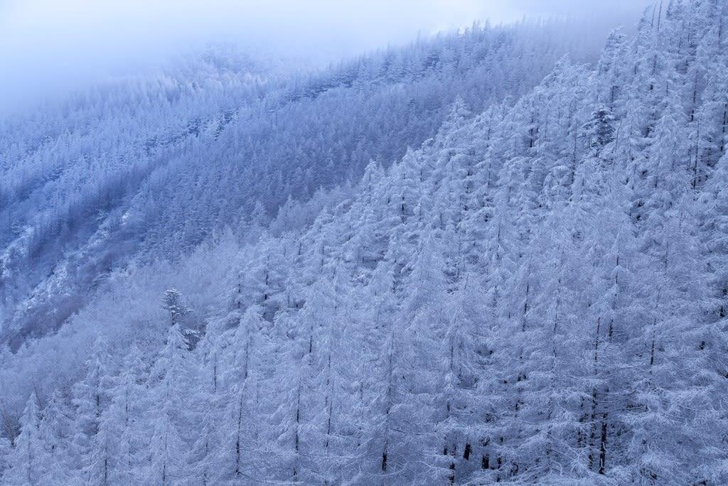 美ヶ原高原の霧氷の写真