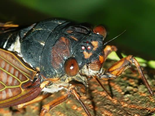 単眼2 - 昆虫複眼の複眼的考察