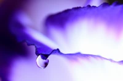 Purple_wave_4
