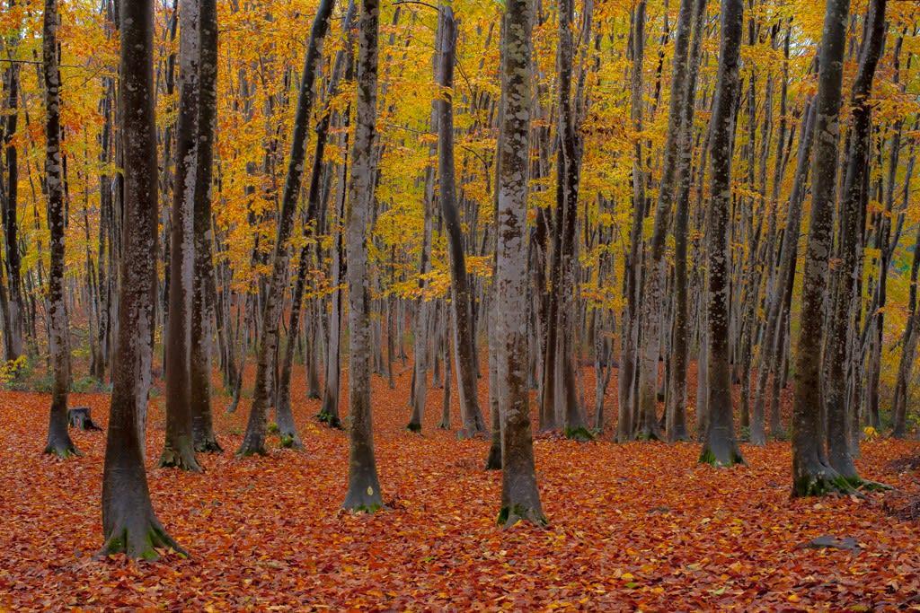 美人林の紅葉の写真