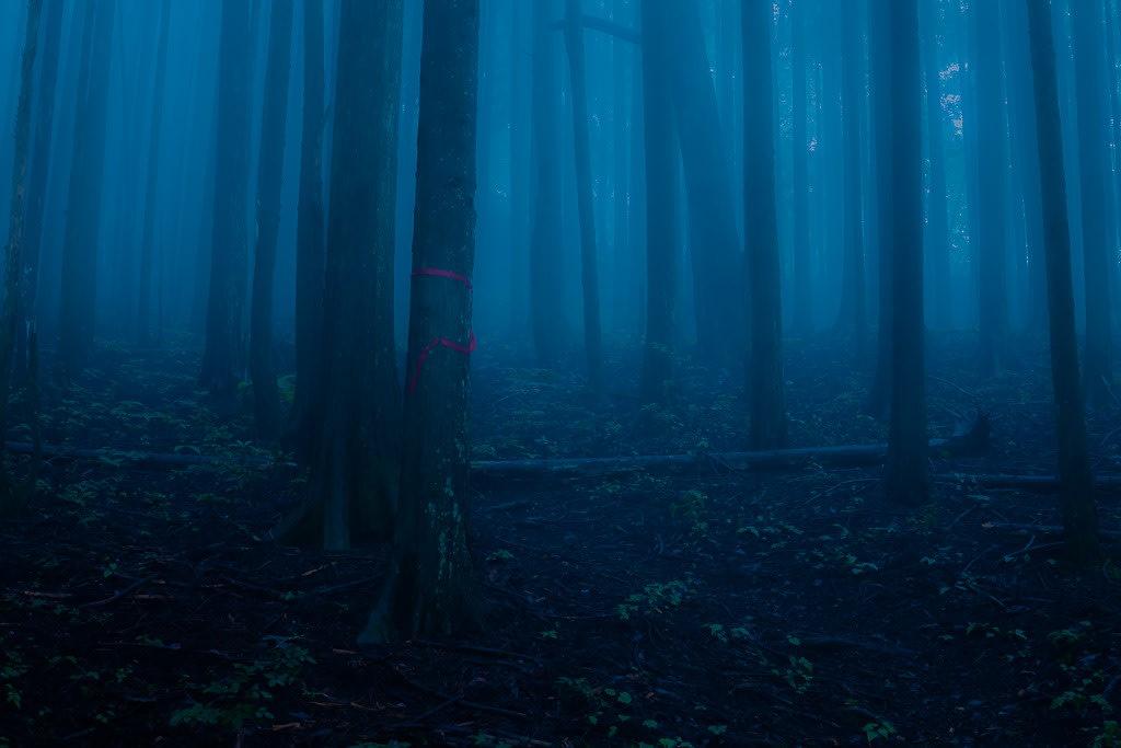 ヒメボタルの生息環境の写真