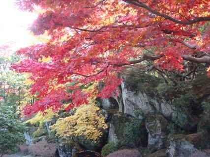 紅葉の苔庭その3