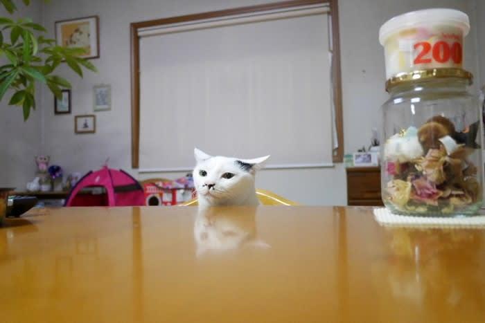 テーブルのぞきのるんこ