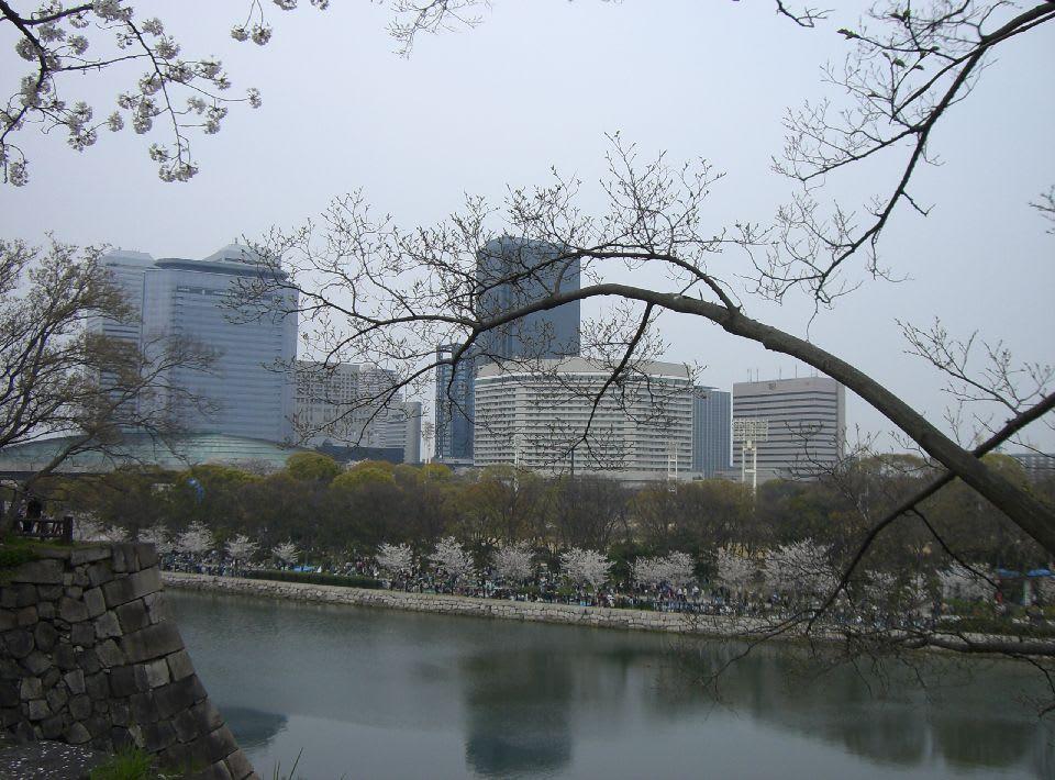 お堀の桜〔1〕