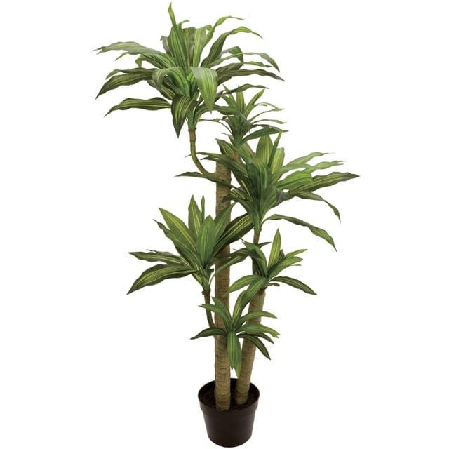 人工観葉植物 幸福の木