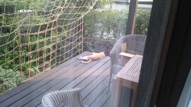 野良猫ちゃん、昼寝中