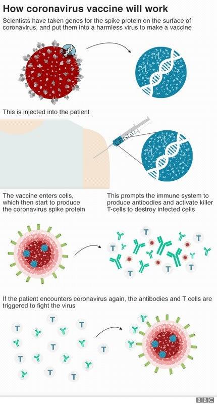 sars ワクチン
