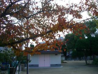 港町公園の紅葉
