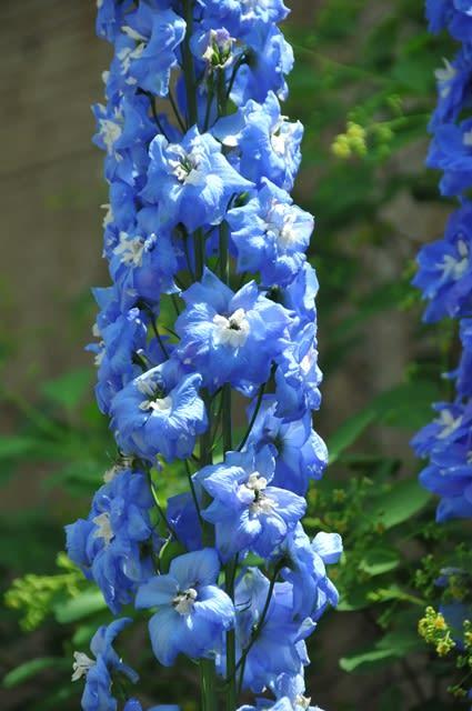 青い バラ 花 言葉 青いバラの花言葉とは?青いバラの歴史と開発秘話を紐解きながらご紹...