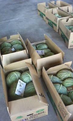 野菜の直売所