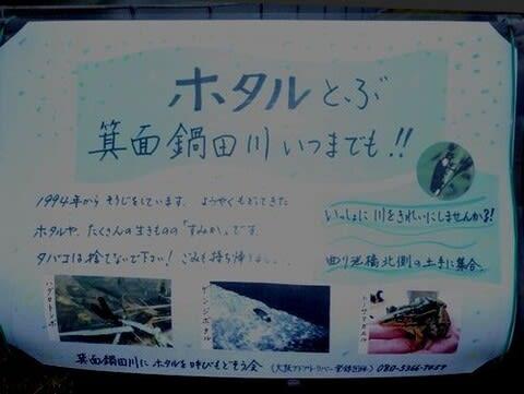 一級河川・箕面鍋田川の秋の花 - 箕面里山のブログ part2
