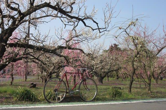 越生梅林 サイクリング 自転車