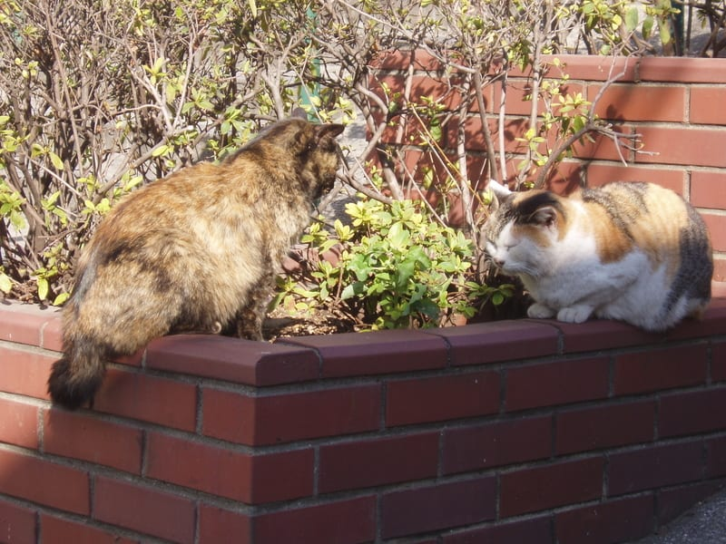 08_two_cats_sit_facing_ach_other