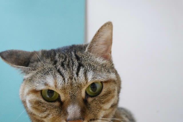 猫の耳はアンテナ@そだね~