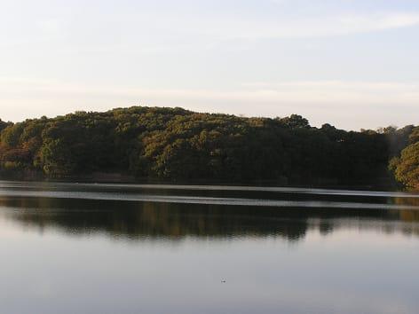 2009多摩湖・狭山湖紅葉情報