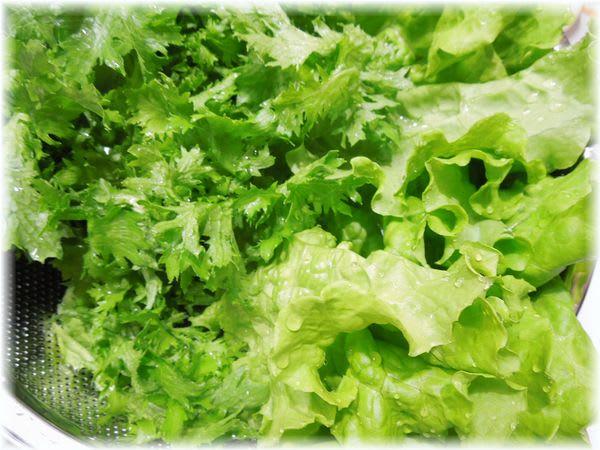 リーフレタスグリーンとわさび菜