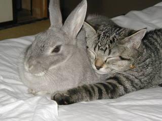 嫌がるプラムに抱きつき幸せそうに眠ってしまいました。『うさぎと猫を一緒に飼えるの?』とよく聞かれます。この写真ほど明確な答えはありません。