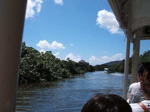 「仲間川遊覧船でマングローブへ」