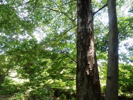 里山の樹木に抱かれて暮らす庭 - fukuokazouen.biz