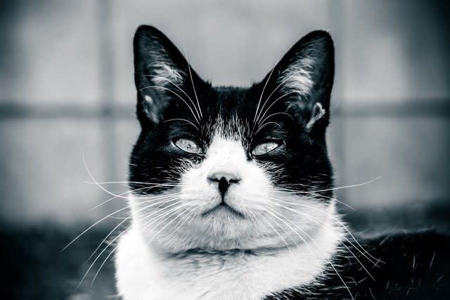 106キロからの挑戦「猫とダメ人間」