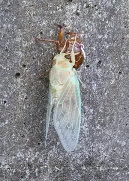 の 虫 復活 象徴